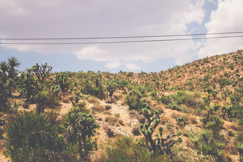 DESERT3orig-lan